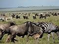 Serengeti 1 (14) (14145749322).jpg