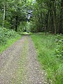 Shady trail, Forest of Dean - geograph.org.uk - 869090.jpg