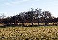 Sheep Grazing near Hornsea Mere - geograph.org.uk - 332228.jpg