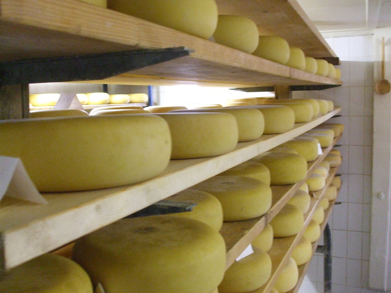Making Gouda Cheese At Home