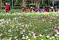 Shilin Presidential Residence Park 士林官邸公園 - panoramio (2).jpg