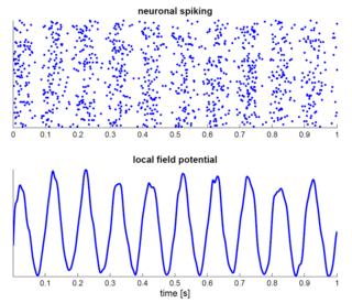 Neural oscillation