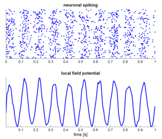 Neural oscillation - Simulation of neural oscillations at 10 Hz. Upper panel shows spiking of individual neurons (with each dot representing an individual action potential within the population of neurons, and the lower panel the local field potential reflecting their summed activity. Figure illustrates how synchronized patterns of action potentials may result in macroscopic oscillations that can be measured outside the scalp.