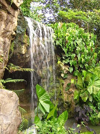Singapore Botanic Gardens - A waterfall in the Ginger Gardens