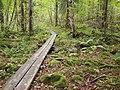 Sippulanniemi nature trail - duckboards 2.jpg