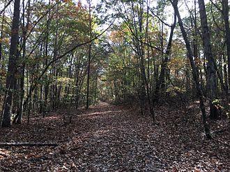 Sipsey Wilderness - Trail 202