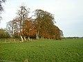 Small Wood Near Park Farm - geograph.org.uk - 281952.jpg