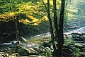 Smokemont Campground, Smokie Mountains NP, Gatlinburg, TN - panoramio.jpg
