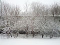 Snow in Minneapolis on April, 18, 2013.jpg
