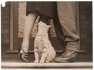 Sam Hood - A soldier's goodbye, with Bobby the cat. Photo by Sam Hood ca. 1942.