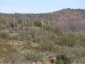 Sonoran Desert N of Phoenix AZ 40968