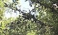 South Lyon High School Shoe Tree, Spencer Road, South Lyon, Michigan.JPG