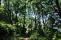 South West Coast Path in woodland near Ponsence Cove (8601).jpg