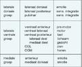Specifieke kerngroepen in thalamus en hun functie.png
