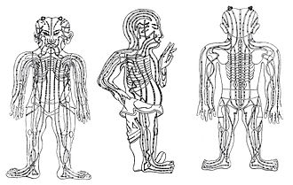 "Andreas Cleyer - Acupuncture meridians in Cleyer's ""Specimen Medicinae Sinicae"""