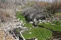 Spring Mountains Willow Creek 2.jpg