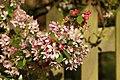 Spring in Epsom (7197765298).jpg