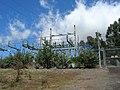 Starr-050817-3957-Buddleja davidii-habit-Keahuaiwi Gulch-Maui (24684633012).jpg