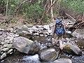 Starr-120425-4781-Syzygium cumini-habit with Jeremy and stream-Waikapu Valley-Maui (24771982669).jpg