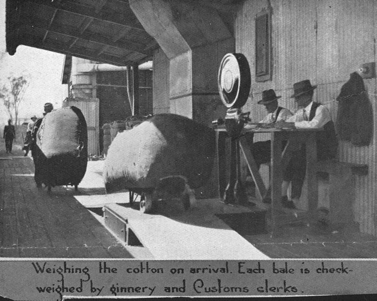 File:StateLibQld 2 119360 Weighing cotton bales at the Brisbane ginnery.jpg