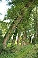 Steenbergse bossen 02.jpg