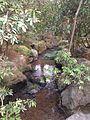 Stream in Ryoanji Temple 1.jpg