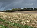 Stubble near Ogbourne St George - geograph.org.uk - 265638.jpg
