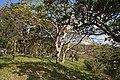 Sueyoshi Park Naha Okinawa Japan06s3.jpg