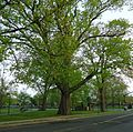 Summit NJ tree and public park near train station.jpg