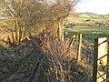 Sunken lane - geograph.org.uk - 1637422.jpg