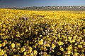 Super Bloom 2017 at Carrizo Plain National Monument (33997425001).jpg