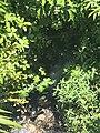 Surveyors Creek downstream.jpg