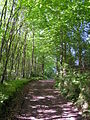 Sussex Border Path - geograph.org.uk - 182732.jpg