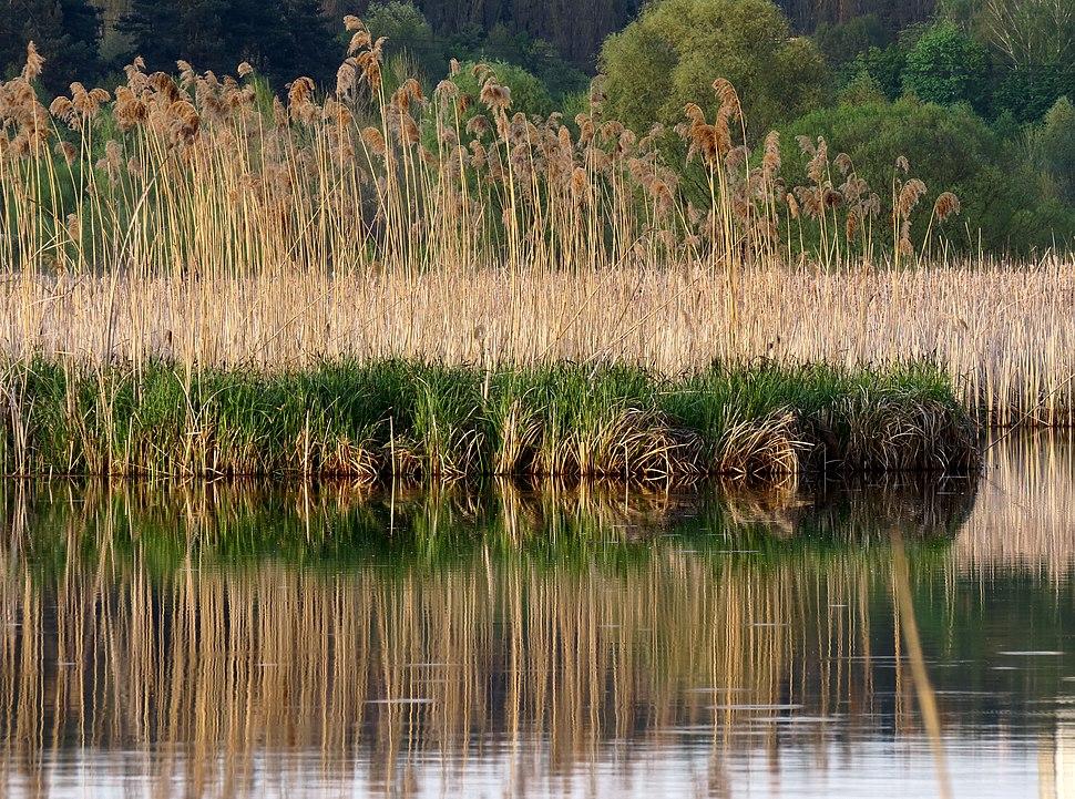 Svyatoshyn ponds3