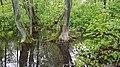 SwampTrees.jpg