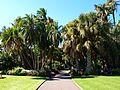 Sydney Royal Botanic Gardens (04).jpg