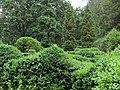 Syretsky arboretum 8.JPG