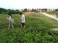 TW 台灣 Taiwan 新台北 New Taipei 萬里區 Wenli District 野柳地質公園 Yehli Geopark August 2019 SSG 119.jpg