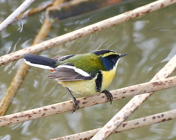 Revista brasileira de ornitologia online dating