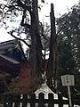 Takano Maki of Nikko Futarasan Shrine.jpg