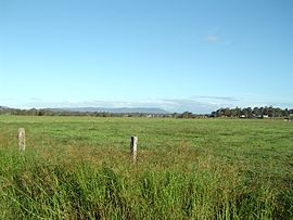 Tamborine Mountain from Chambers Flat.JPG