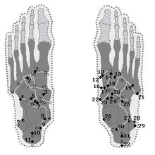 Tarsus (skeleton) - Wikipedia