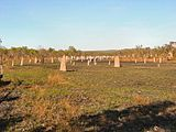 . Hundreds of compass termite mounds are visible in this photo of a field in northern Australia. The chisel-shaped mounds range from several centimeters to several meters in height.