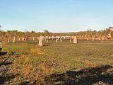 . Сотни компасных термитников видны на фото в поле в северной Австралии. Их высота от нескольких сантиметров до нескольких метров.