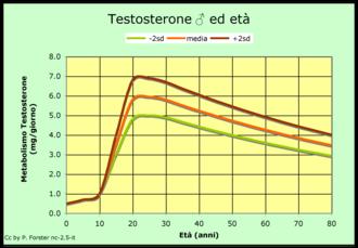 Sintesi di testosterone ed età