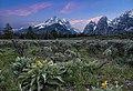Teton Sunset with Flowers.jpg