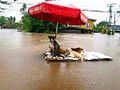 Thailand Flood 2011 Floating right (6305953313).jpg