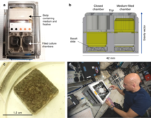 The BioRock Experimental Unit of the space station biomining experiment that demonstrated rare earth element extraction in microgravity and Mars gravity.webp