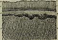 The Dental cosmos (1891) (14779105524).jpg
