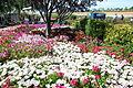 The Flower Fields at Carlsbad Ranch 15 2014-04-28.jpg